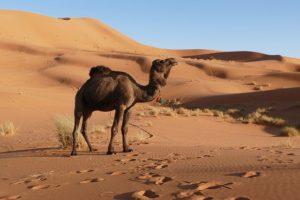 Yoga Retreat Marokko - ein Wüstenbesuch gehört dazu